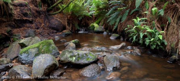 Capstan Bay Stream (site 13), photo copyright EOS Ecology, Shelley McMurtrie.