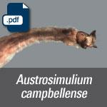Austrosimulium campbellense.