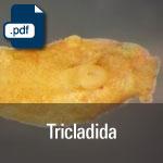 Tricladida.